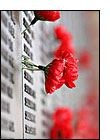 Remembrance Day: Let's not forget…