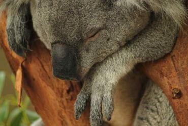 Sleep 2.0: The promise of productivity