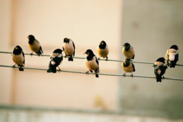 Be a Social Superstar: How to Get More Followers on Twitter