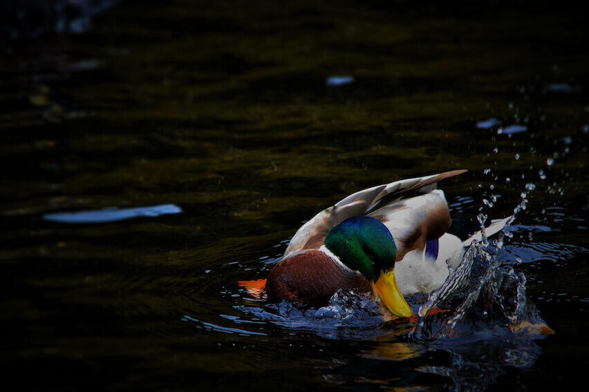 Stay Organized: Set Up Business Expense Categories to Keep Your Ducks in a Row