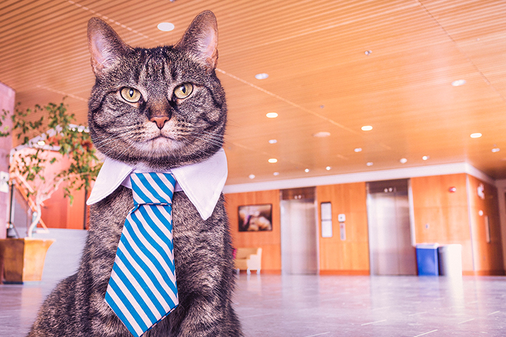 Gratisography stock photo cat accounting solution